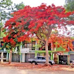 Kalaoya: Red, the colour of nature