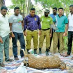 Wild Life Officers with an animal which had just died in one of the traps