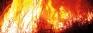 Sri Lankans spark most destructive forest fires