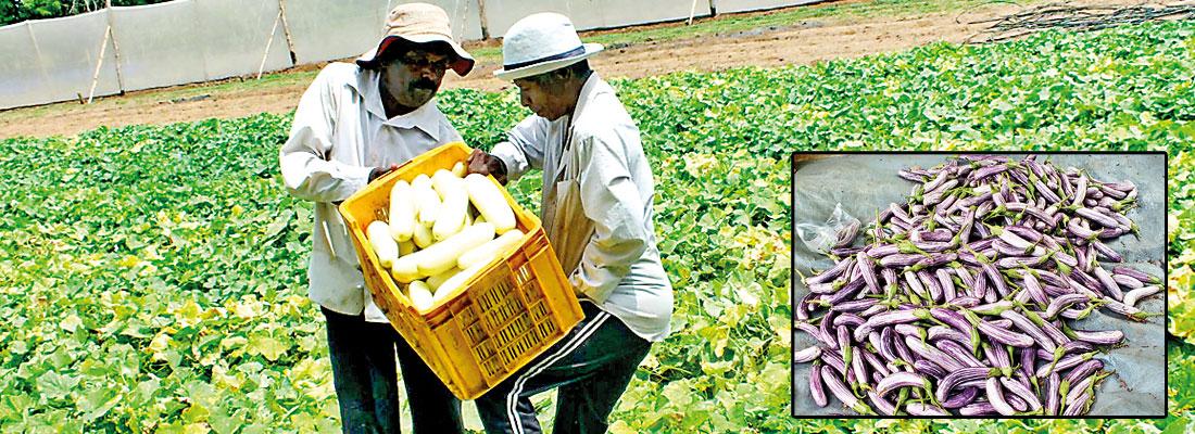 Transforming Sri Lanka's farmers to grow healthy food courtesy Cargills