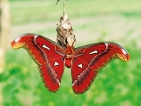 'Made for mating' giant moth causes stir