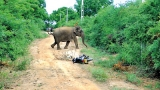 Losers in battle for habitat