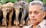 Dr. Pilapitiya on 'Social behaviour of elephants'