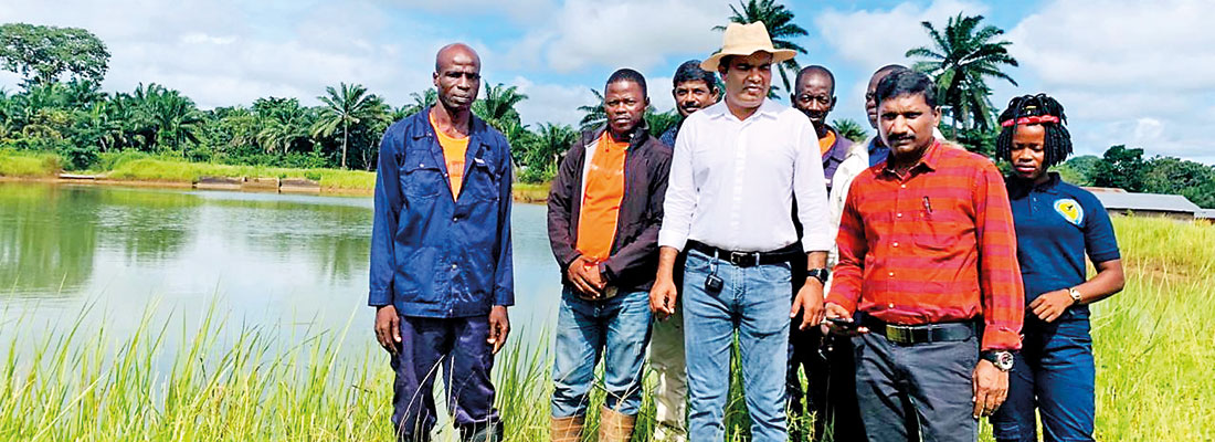 Browns' Sunbird  leads African entry through Sierra Leone