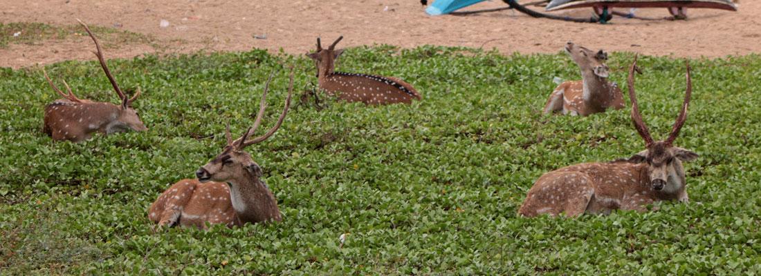 Where deer roam free
