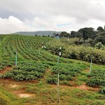Some-lands-use-for-agricultural-purposes