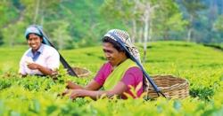 Carbon neutral teas
