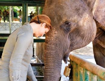Queen of elephants