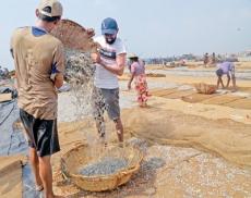 Dry fish from Negombo