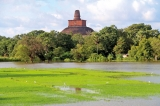 Floods follow drought for rice bowl