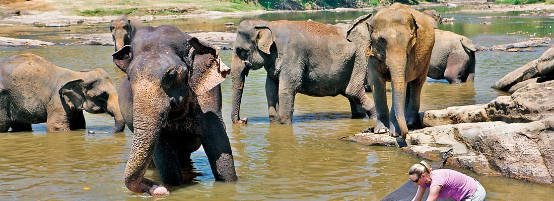 Struggling to retain SL tourism's charm