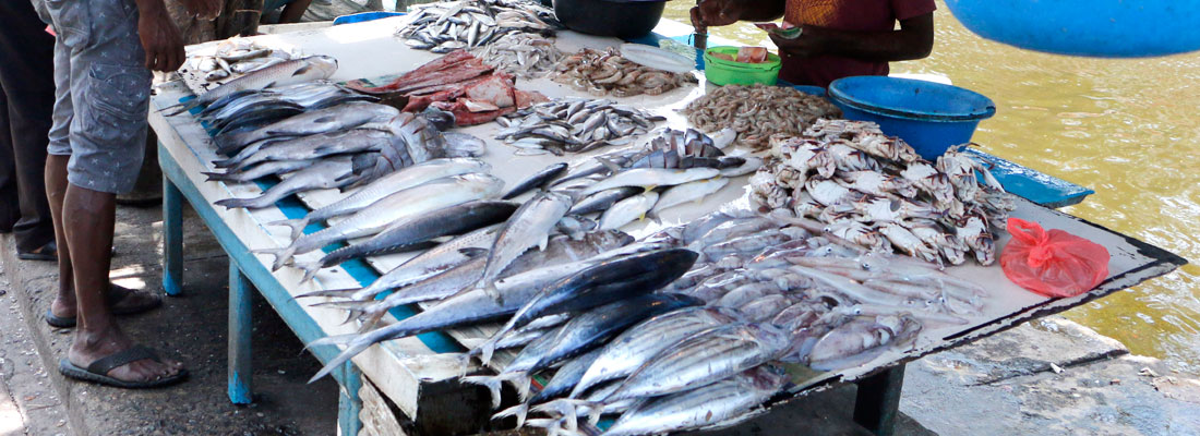 Dikovita fishing industry in troubled waters
