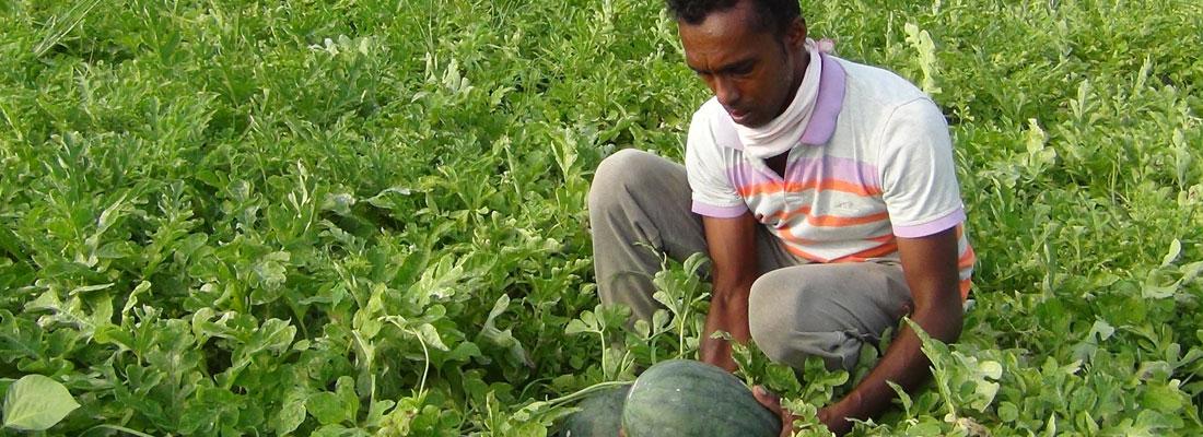 Lament of the Kalpitiya farmers