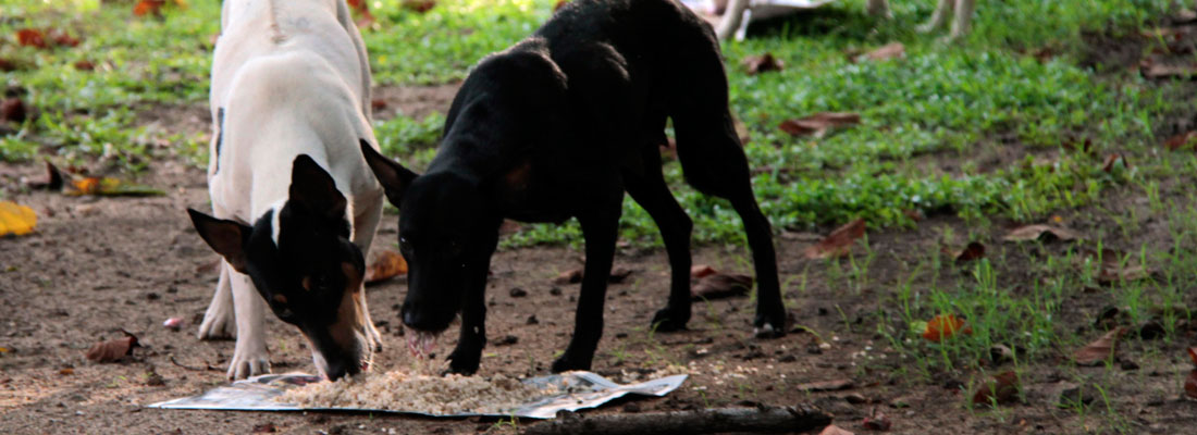 Animal activists heed starving dogs' SOS