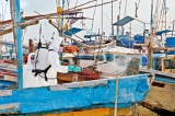 Fisheries harbour gets virus cleanup