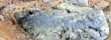 Badahena-galge reveals prehistoric 'language of dimples'