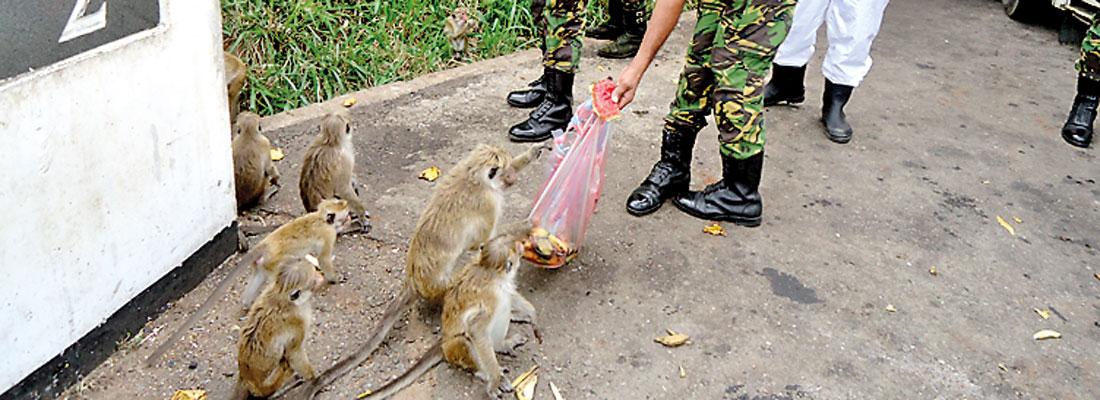 Milk rice of STF kindness for Mahiyangana monkeys