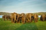 Human-elephant clash over land