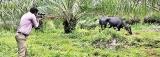 Rabid jackal alert following girl's agonising death