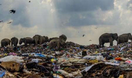 Tilaxan's effort to capture plight of elephants wins award