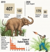 Plant and earth barriers to help deter elephant intrusions