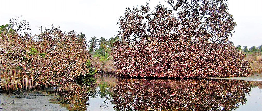 Dry Puttalam robbed of its green cover