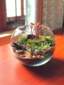 Wonders of nature in a glass container