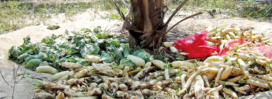 Market closures hit Kalpitiya vegetable farmers; Govt. intervention sought