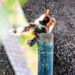 Kingfisher-Pic-Indika-Handuwala