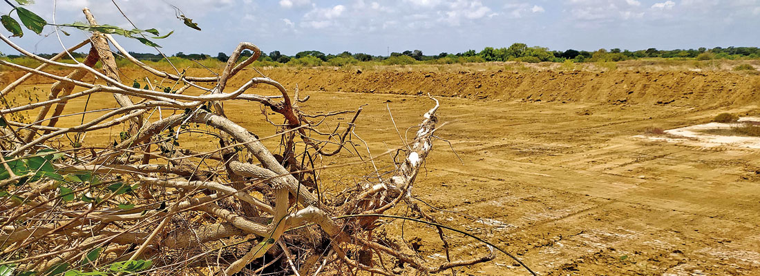 Laws bulldozed to clear way for land and forest plunder