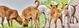 Govt barking mad if it holds back cash to defeat rabies