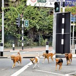 Colombo: Disciplined doggies