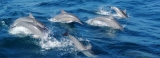 Date with dolphins, only  if you are healthy