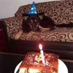 Colombo: Bow-wow party