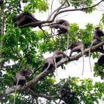 Kesbewa: Swinging free
