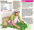More pay for higher plucking output sticking point in tea worker wage tussle
