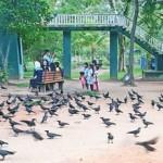Viharamahadevi Park: Social distancing