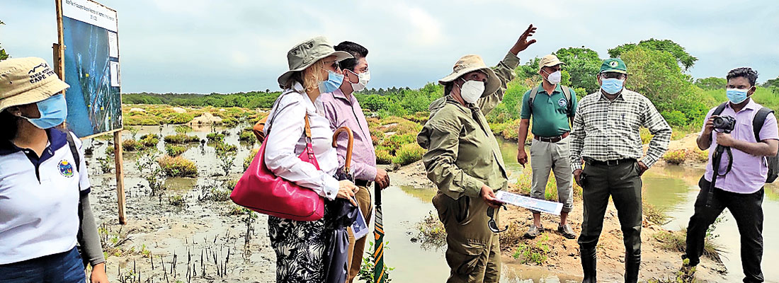 Unique mangrove restoration project takes root in Puttalam