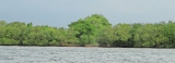Lanka leads save-mangroves global initiative; Britain steps in to prop up local campaign