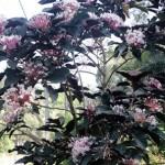 Alawwa: Flowers for Valentine
