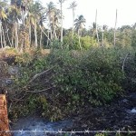 The destruction of mangroves