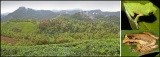 Bleak future for our rainforest biota