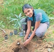 Lyceum International Kurunegala celebrates Independence Day with a Tree Planting Campaign
