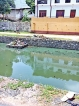 Clogged canal breeds mosquitoes
