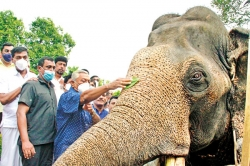 Anointing the country's biggest tusker at the state ceremony