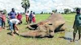 Elephants kill more farmers in fightback for land