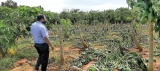 Northern farmers in woe as Cyclone Yaas leaves a trail of destruction