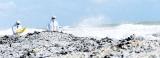 Tourism impact: Xpress Pearl pollutes shoreline