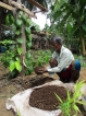 Polluting soils lead to greater havoc than polluting oceans