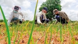 Jetwing staff doubles up as farmers